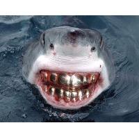鲨鱼弟弟.
